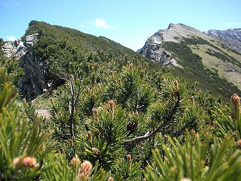 Klettersteig Besler : Holzhaus besler in hinterstein ausblicke
